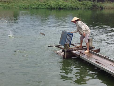 Phát huy tiềm năng nuôi trồng, khai thác thủy hải sản